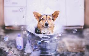 Картинка взгляд, пузыри, собака