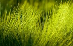 Обои макро трава природа