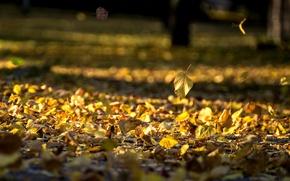 Картинка осень, листья, природа, фон, widescreen, обои, желтые листья, wallpaper, листочки, широкоформатные, листики, background, полноэкранные, HD …