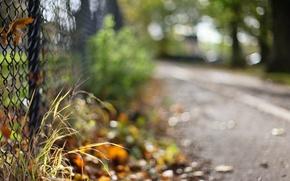 Картинка дорога, трава, макро, забор