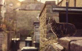 Обои collar, eye, jump, cat, sunshine, roof