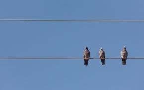 Обои птицы, небо, провода