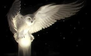 Картинка глаза, взгляд, ночь, сова, крылья, арт