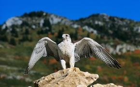 Картинка взгляд, горы, камень, контакт ног с земной поверхностью, завершение посадки или приземления, Кречет, складывание крыльев