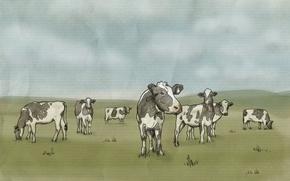 Картинка Рисунок, молоко, Луг, Пейте дети, будете здоровы, Говядина, Коровы