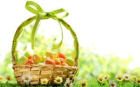 Картинка трава, цветы, корзина, ромашки, яйца, весна, colorful, пасха, flowers, spring, крашеные, eggs, easter, daisy