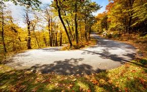 Картинка дорога, осень, поворот