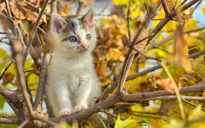 Картинка puppy, cat, autumn, tree, branches, foliage, buds