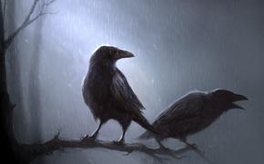 Обои птицы, рисунок, ветка, вороны