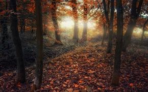 Картинка осень, лес, деревья, листва, forest, trees, Autumn, leaves, fall