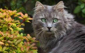 Обои кошка, взгляд, листочки, усы