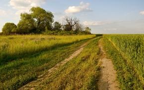 Обои дорога, поле, лето, пейзаж, природа