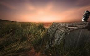 Картинка поле, трава, закат, рендеринг, сова, вечер, сарай, арт, обои от lolita777