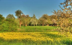 Картинка лето, небо, деревья, листва, трава.цвет