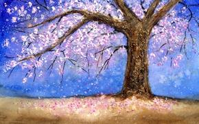 Картинка дерево, tree, cherry blossom, вишня в цвету