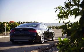 Картинка Audi, ауди, black, rearside