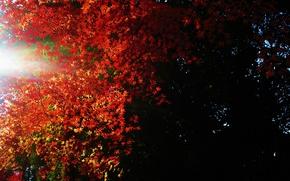Картинка листья, свет, темнота