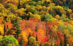 Картинка осень, лес, краски, Природа, Канада, Онтарио