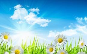 Картинка небо, трава, листья, солнце, облака, капли, цветы, свежесть, роса, green, ромашки, красота, весна, white, grass, …