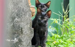 Картинка взгляд, маленькие, котята