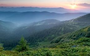 Картинка утро, горы, туман, Украина, рассвет, Карпаты, лес