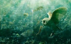 Картинка вода, пузыри, сова, морской конек, deviantart, PSHoudini