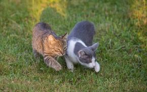Картинка кошки, прогулка, парочка, Мы с Тамарой ходим парой