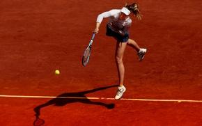 Обои мяч, ракетка, Мария Шарапова, теннис, корт