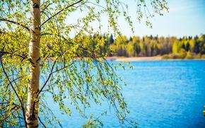 Картинка лес, листья, пейзаж, природа, река, дерево, листва, весна, береза
