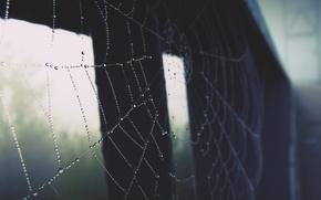 Картинка макро, паутина, роса. капли, утро на реке