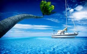 Обои пальмы, обои для рабочего стола, широкоформатные обои, широкоэкранные обои, яхты, лодки, вода, обои скачать бесплатно, ...