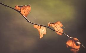 Картинка макро, природа, фон, листва, ветка, боке