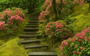 Картинка растения, лестница, Японский сад