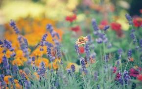 Картинка лето, цветы, размытость
