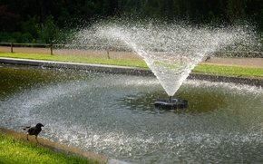 Картинка трава, парк, widescreen, птица, обои, фонтан, wallpaper, ворон, ворона, широкоформатные, background, обои на рабочий стол, …