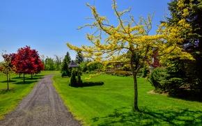 Картинка трава, листья, деревья, парк, краски, дорожка