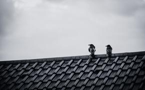 Картинка крыша, небо, птицы