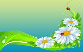 Обои цветы, божья коровка, ромашка, коллаж, насекомое