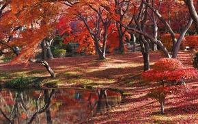 Картинка осень, лес, рзеро