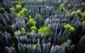 Картинка деревья, скалы, Мадагаскар, Tsingy de Bemaraha National Park