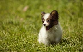 Картинка лето, трава, собака, щенок