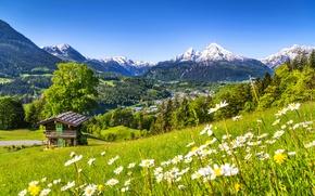 Обои flowers, горы, дорога, path, trees, walk, sky, лес, spring, forest, природа, house, деревья, mountain, скала, ...