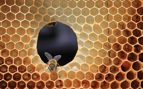 Картинка пчела, соты, улей