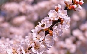 Картинка Весна, Настроение, Розовое цветение
