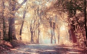 Картинка дорога, осень, лес, деревья, увядание