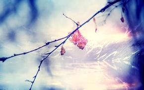 Картинка макро, горы, природа, лист, ветка, nature