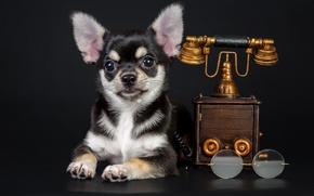Картинка собака, очки, щенок, телефон
