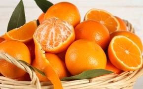 Обои fruit, кожура, oranges, цитрусы, фрукты, апельсины, citrus, корзина