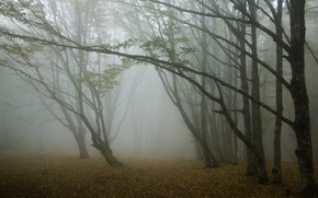 Картинка лес, деревья, туман, Осень
