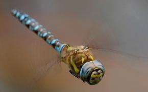 Картинка макро, фон, крылья, стрекоза, насекомое